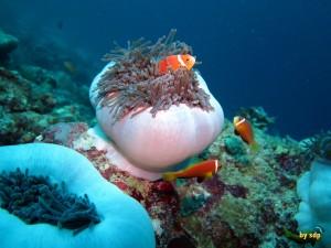 Maldivas3