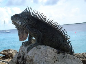 Bonaire2